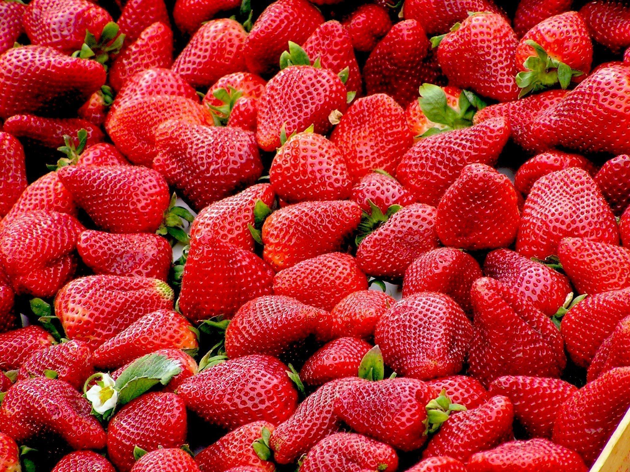 Frische gepflückte Erdbeeren