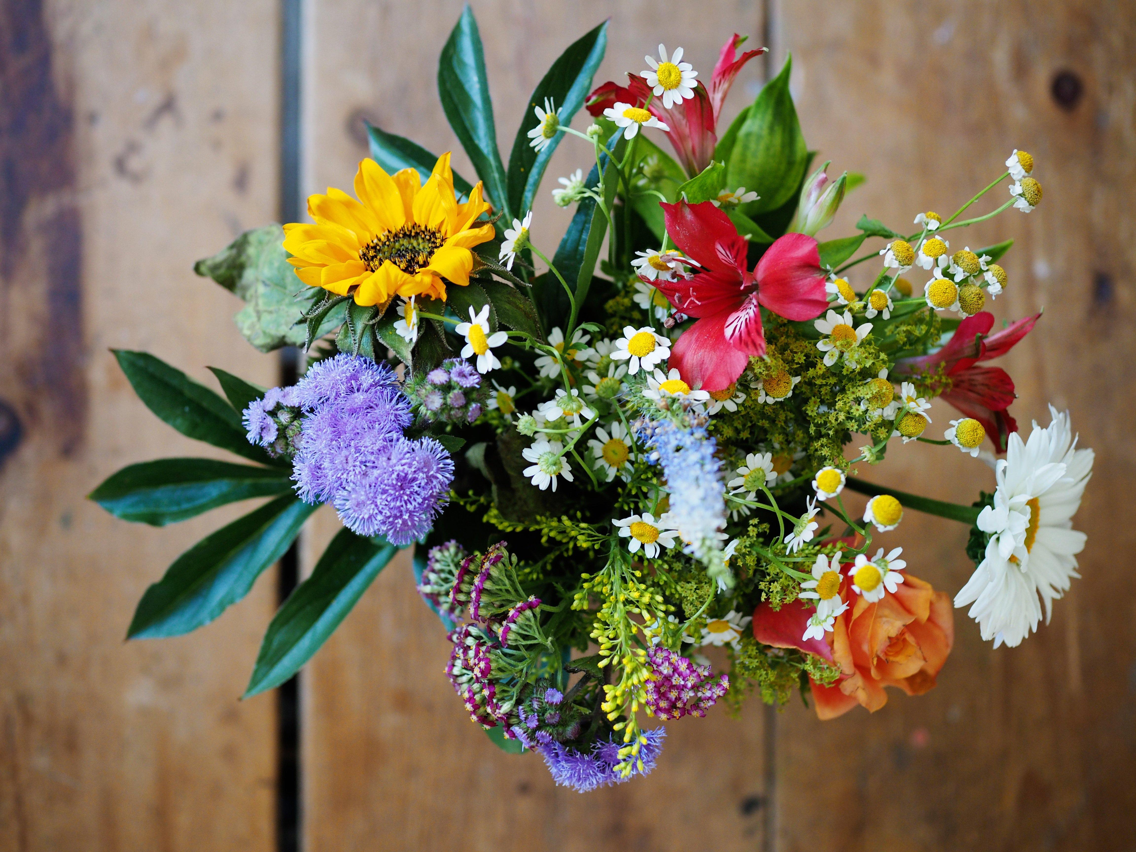Schnittblumen Für Die Vase Sollten Eine Woche Halten Yvonne Willicks
